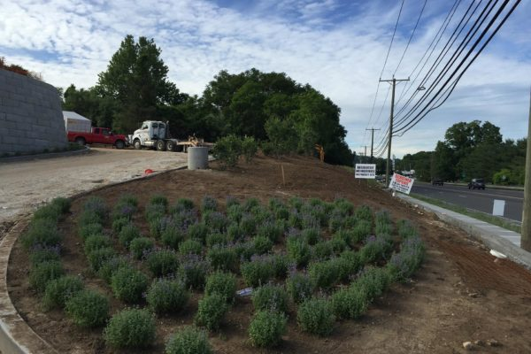 commercial-landscaping-installation-001
