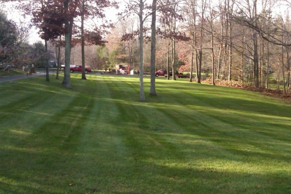 danbury-lawn-mowing-001