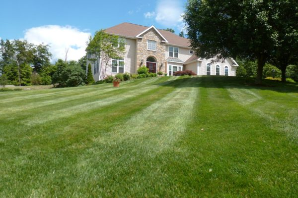 danbury-lawn-mowing-012